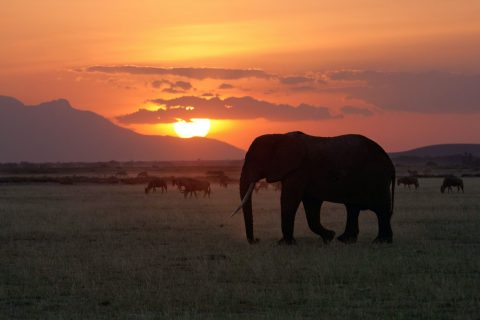 African_Sunset_With_Elephant